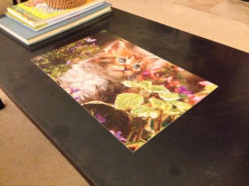 500 Pieces of Kitten