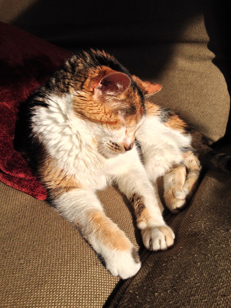 Grandma Cat at Rest
