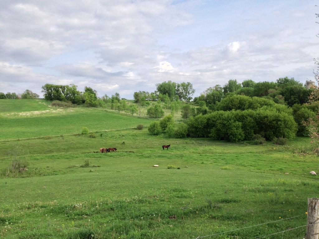 Donaldson Trail Horses