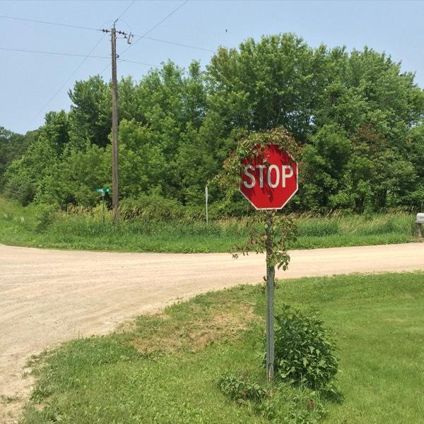 Stop Sign Vine