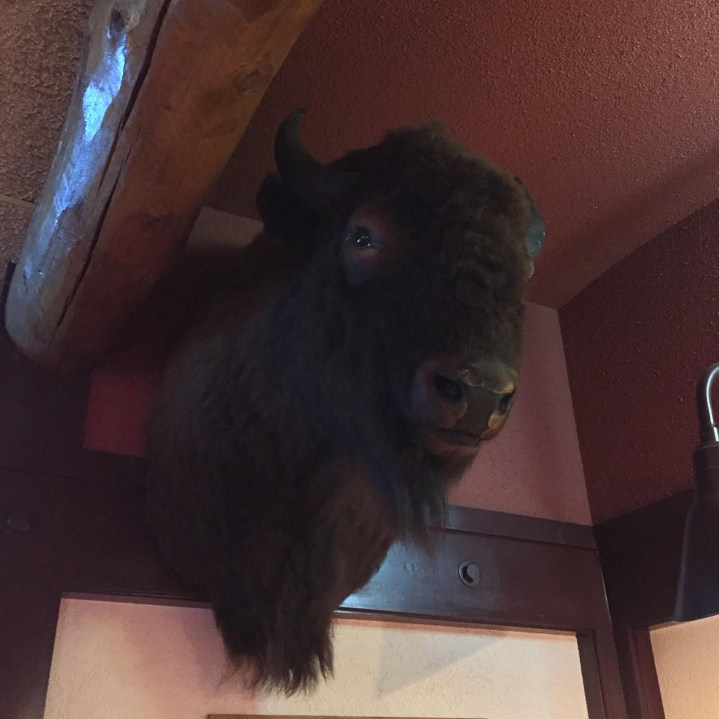 Buffalo Head I