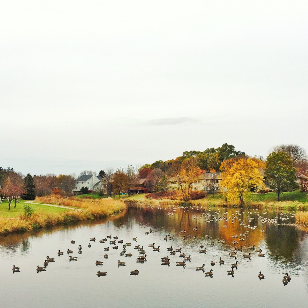 Northfield Geese