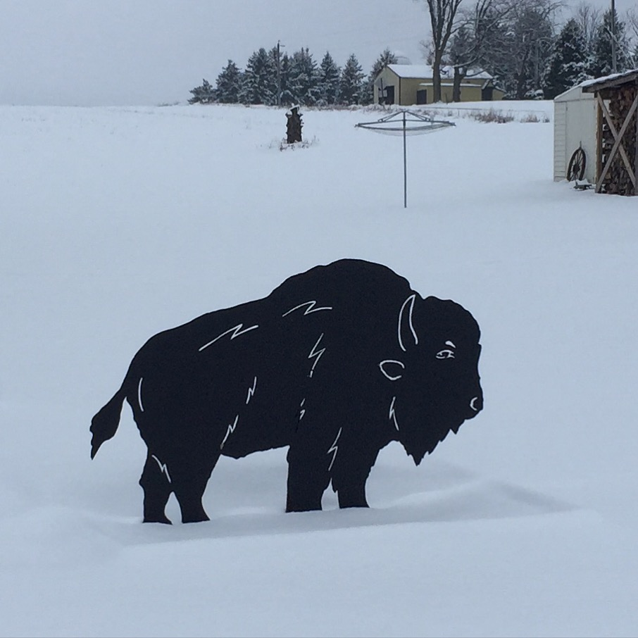 Steel Bison in Dallas, Wisconsin