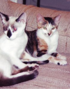Snowshoe and Sabine (1996) - IV