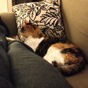 Sofa Snuggles (May 2015)